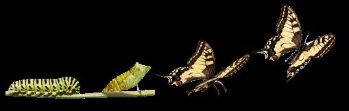 TransformationButterflies